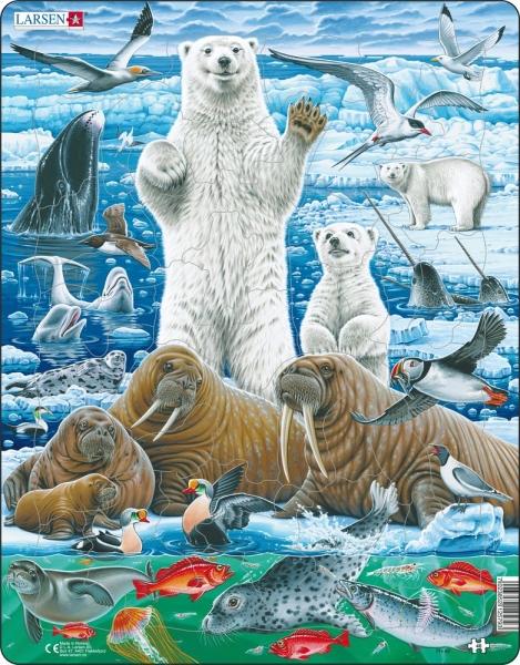 Arktis - Isbjörn och valross