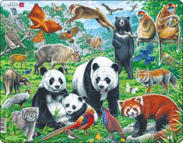 Djur i Kina